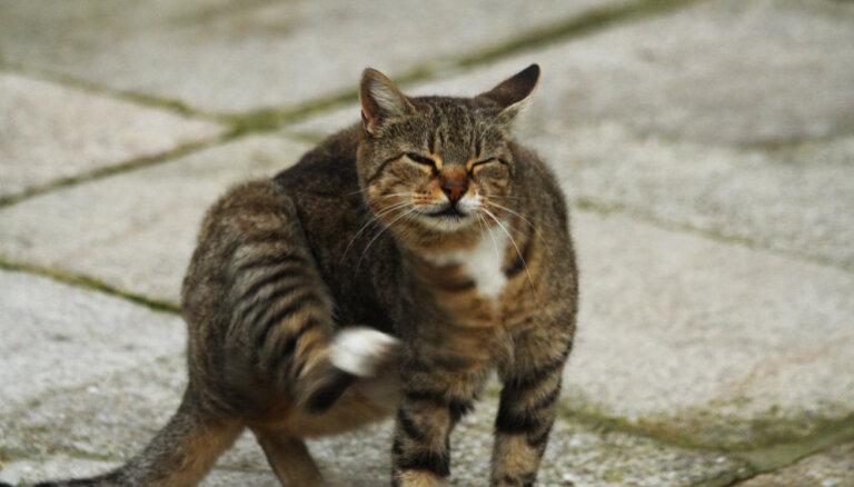 Kā atbrīvot kaķi no blusām?