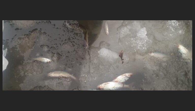 Aculiecinieka kadri: Platones upē bojā iet zivis
