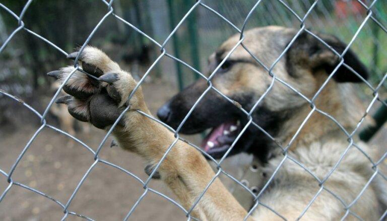 Nedēļas nogalē Jelgavā suņi sakoduši divus cilvēkus
