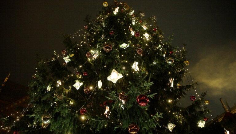 В понедельник для Риги выберут рождественскую елку