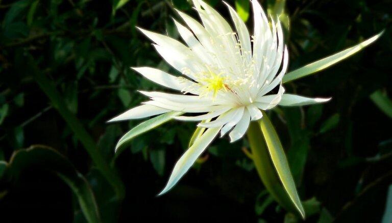 Даже в вазу страшно ставить: Топ-5 самых дорогих цветов в мире