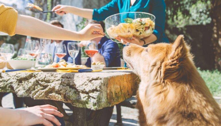 Jāņu mielasts mājas mīlulim: produkti no svētku galda, kurus sunim dot nevajadzētu