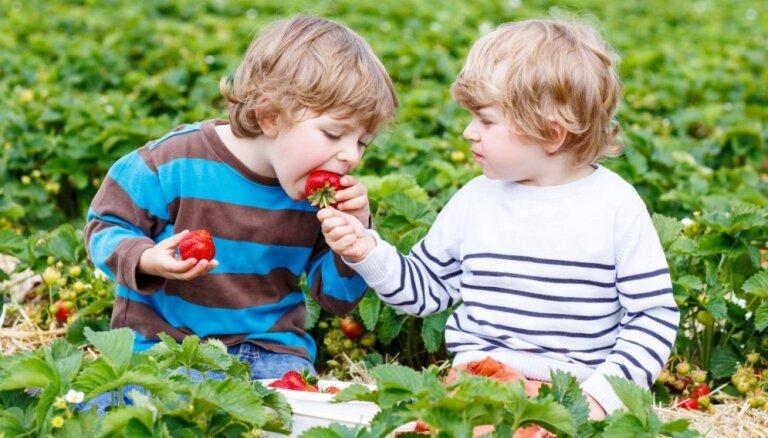 8 ieguvumi veselībai, ko sniedz dārza karaliene zemene