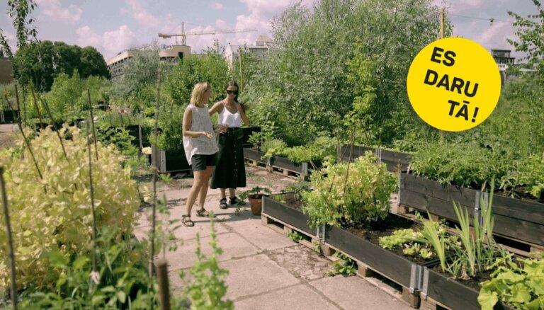 Dārziņš pilsētā: Dita Birkenšteina un viņas zaļais vaļasprieks