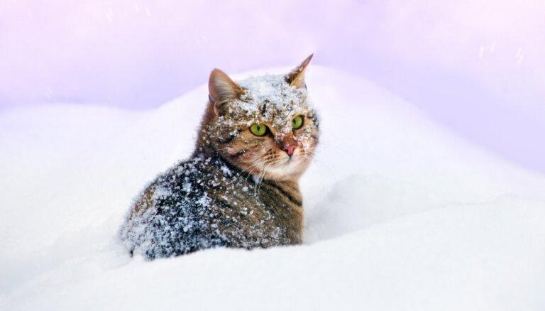 Не дай ему замерзнуть: что надо знать о зимнем уходе за домашними животными