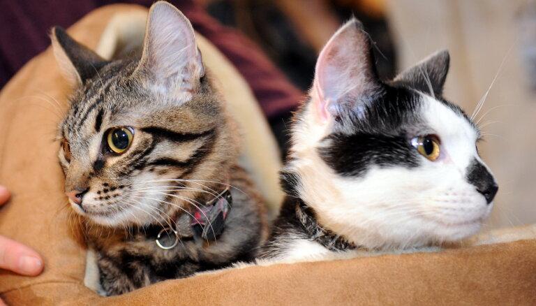 Рижский кот Кузя не вернется в Ратушу