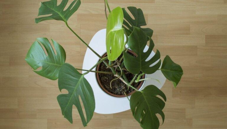 5 лучших рецептов подкормки для домашних растений