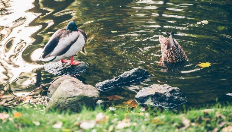 Skolēnus aicina vērot putnus un dalīties novērojumos ar citiem