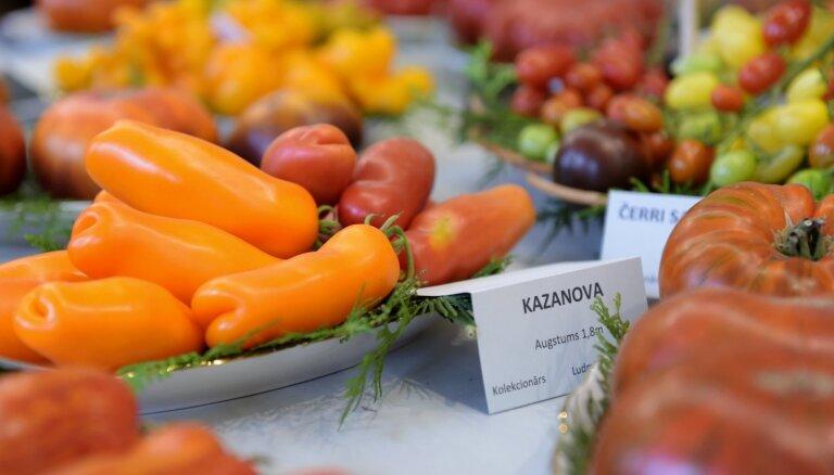 Foto: Erotiski nosaukumi un krāsu mikslis – tomātu parāde Dabas muzejā
