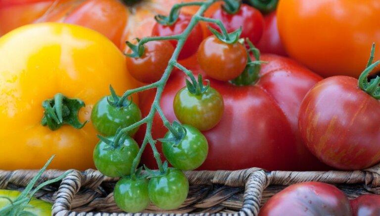 Slavas dziesma tomātam: Kāpēc tas ir viens no veselīgākajiem dārzeņiem?