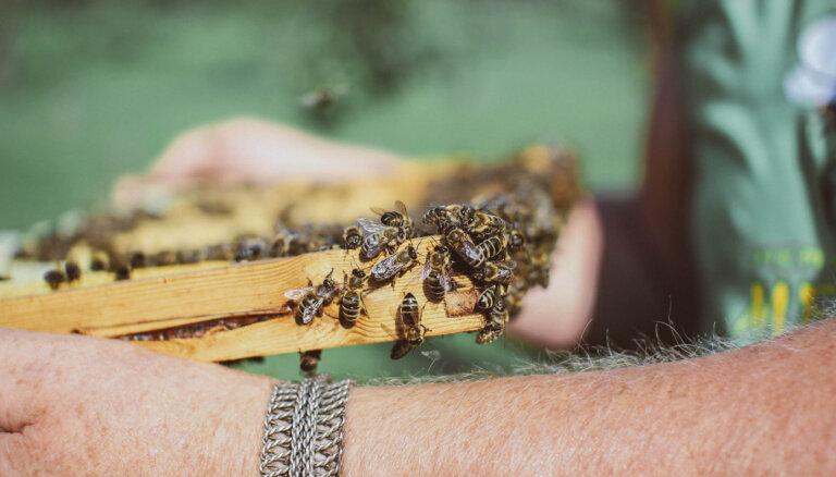 Bitēm draudzīgs lauksaimnieks – vai tas var būt?