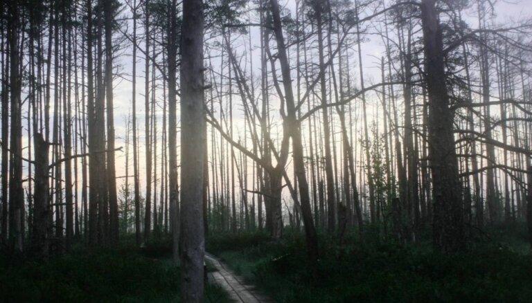 Foto: Klusums un miers Cenas purvā pirms saullēkta