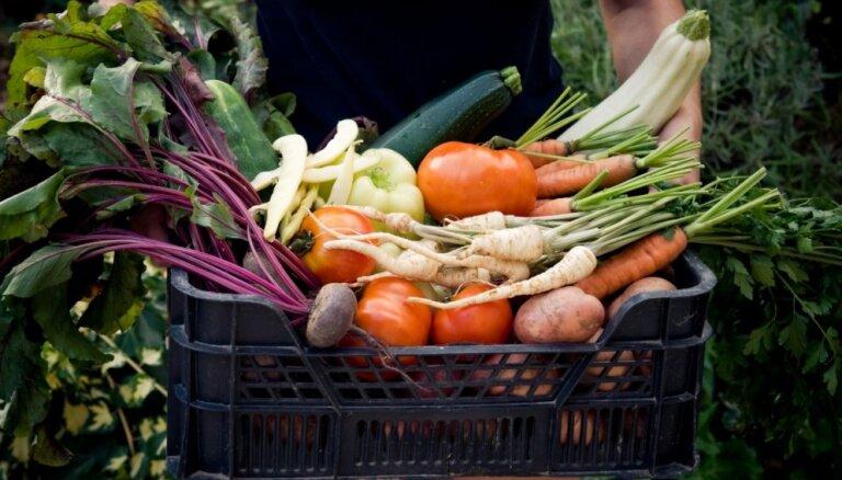 Kad raža novākta: kurus dārzeņus glabāt virtuvē, vēsā pagrabā un kurus saldēt