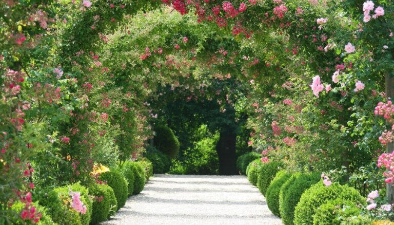 Puķu dārzs sievišķīgi sārtos toņos: labāko augu izvēle, kompozīcija un kopšana