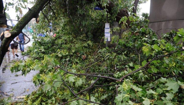 Rīgā plānots nozāģēt vēl vismaz 358 bīstamos kokus