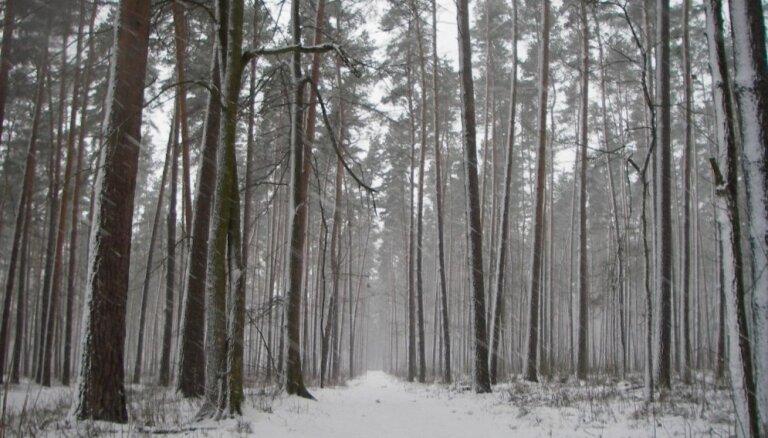 Aculiecinieka foto: 'Kaprīzās ziemas ainiņas Purvciemā'