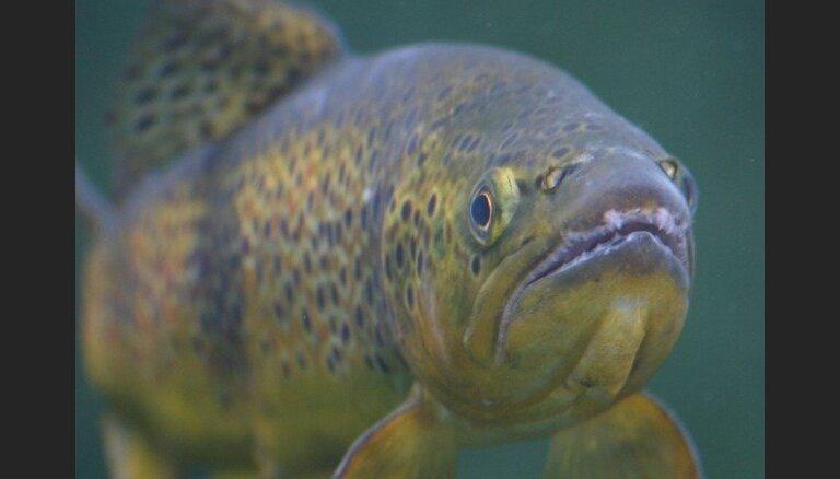 Dānijas kompānija plāno zivju fermas izveidi netālu no Klaipēdas ostas