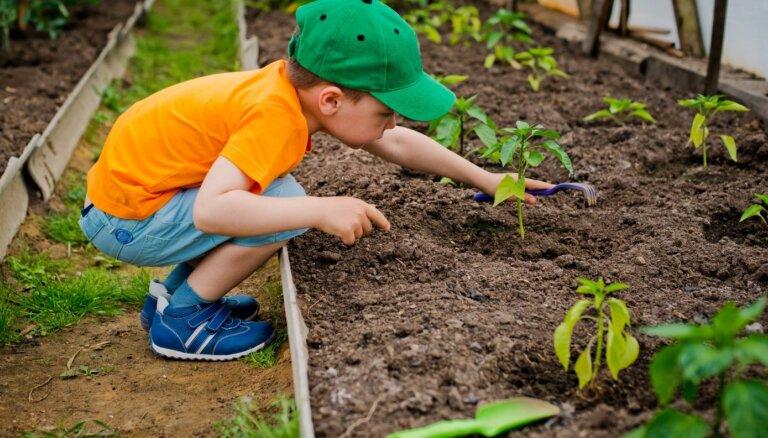 10 простых советов для сада и огорода