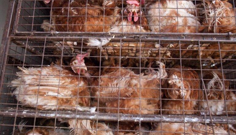 Eiropas Komisija virzīs sprostu aizliegumu ES fermās