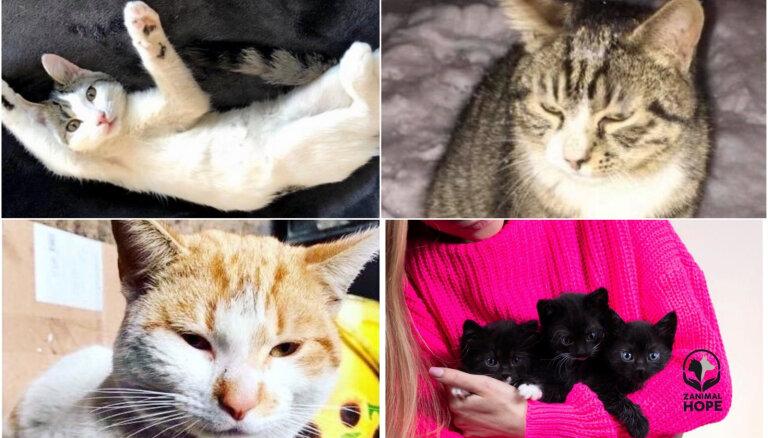 Izmesti uz ielas un atrasti kartona kastē: četri kaķi ilgojas pēc māju siltuma