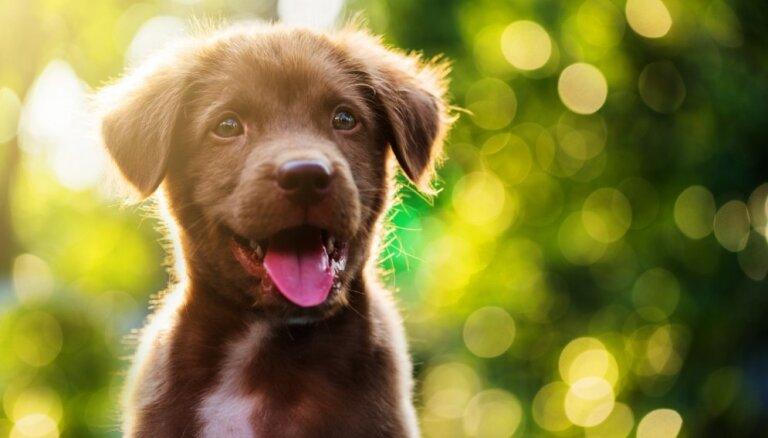 Četri veidi, kā suns izrāda pieķeršanos savam saimniekam