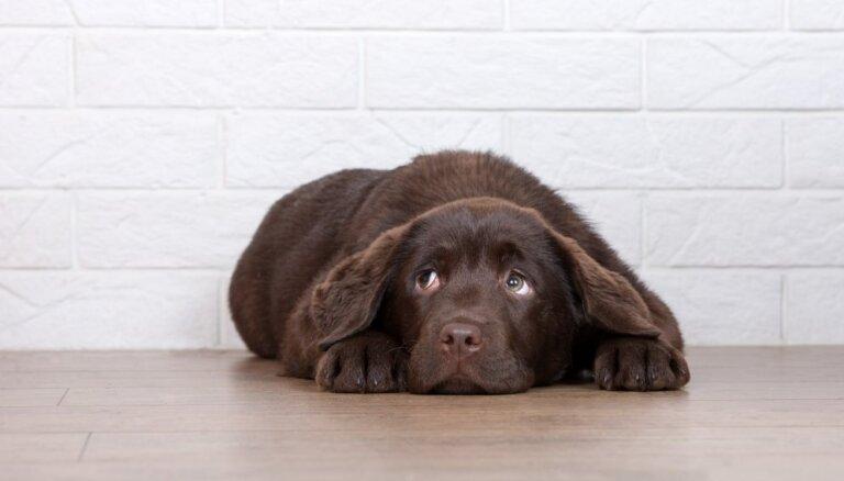 Советы кинолога: как помочь собаке справиться со стрессом во время салюта