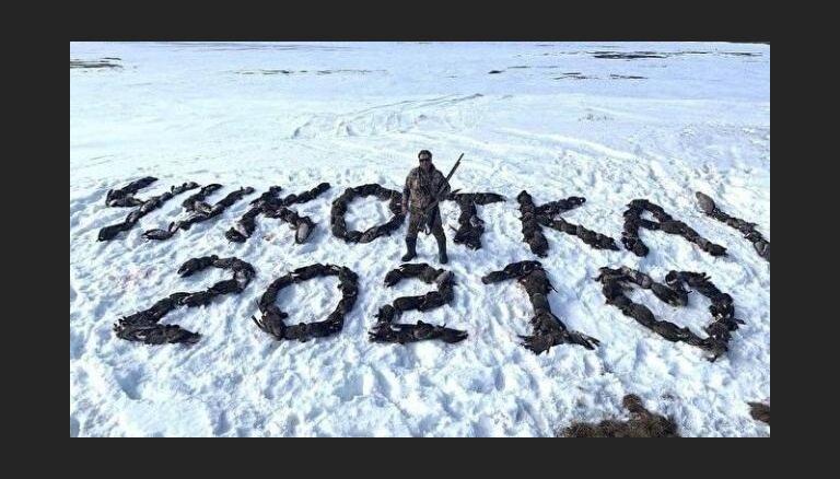 Krievijas deputāts no 150 nošautām zosīm izliek uzrakstu 'Čukotka 2021'