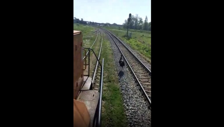 ВИДЕО: Необычное зрелище - в Резекне наперегонки с поездом бежит эму