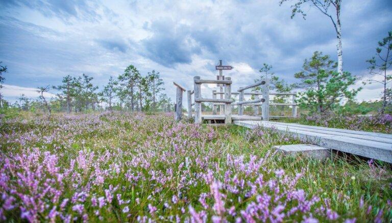 Romantiski foto: Ķemeru tīrelī zied virši