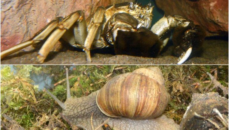 Rīgas zoo atklās divas jaunas ekspozīcijas ar Latvijas dabas jaunpienācējiem