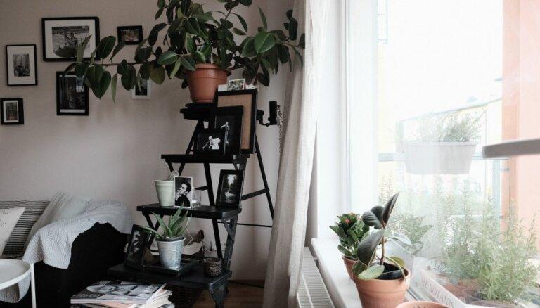 10 idejas, kā mājoklī izcelt telpaugu kolekciju