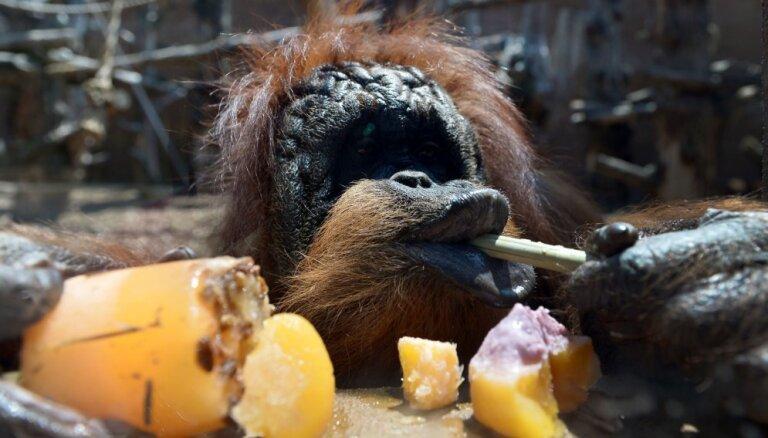 На Центральном рынке изъято более 800 кг фруктов и овощей: их скормят зверям в Рижском зоопарке