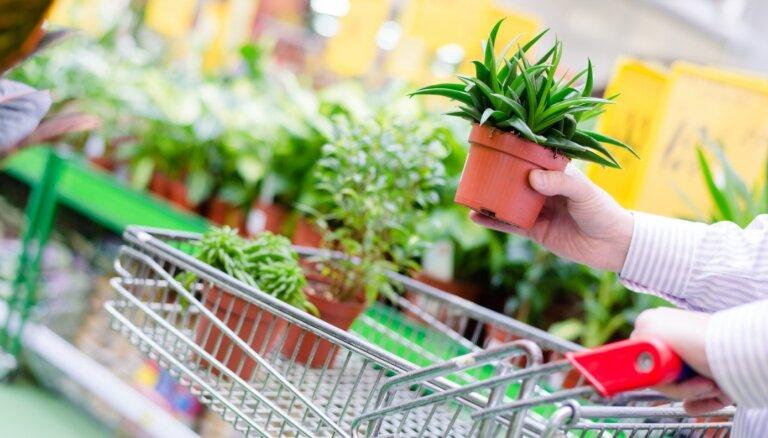 Dāvanu špikeris: 23 noderīgas dāvanas dārzkopjiem un telpaugu mīļiem