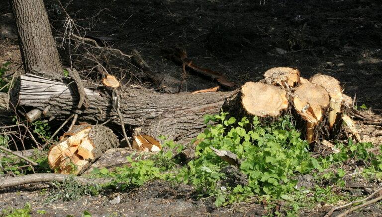 Вырубить 54 дерева, чтобы построить дом возле Ботанического сада: Рижская дума просит жителей высказать свое мнение