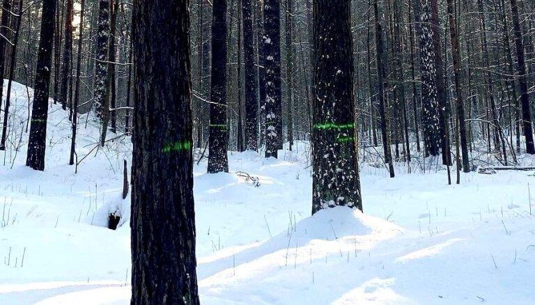 Foto: Lasītāju mulsina Mežaparkā ar krāsu atzīmēti koki