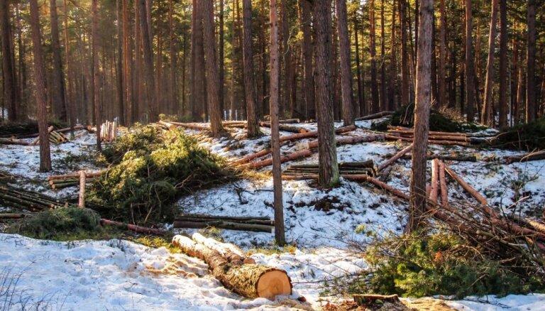 Aculiecinieka foto: Mežaparkā lielā daudzumā izcērt kokus