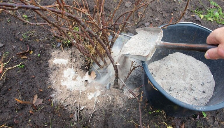 No pelnu kaisīšanas līdz sniega nopurināšanai: veicamie dārza darbi ziemā