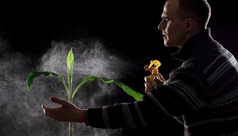 'Augļus vēl neesmu sagaidījis'. Kā rēzeknietis Jānis Litavnieks audzē mājās banānus