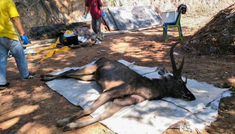 ФОТО: В желудке мертвого оленя в Таиланде нашли 7 килограммов мусора