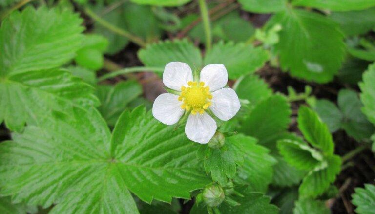 Шесть цветов, которые нельзя сажать на участке
