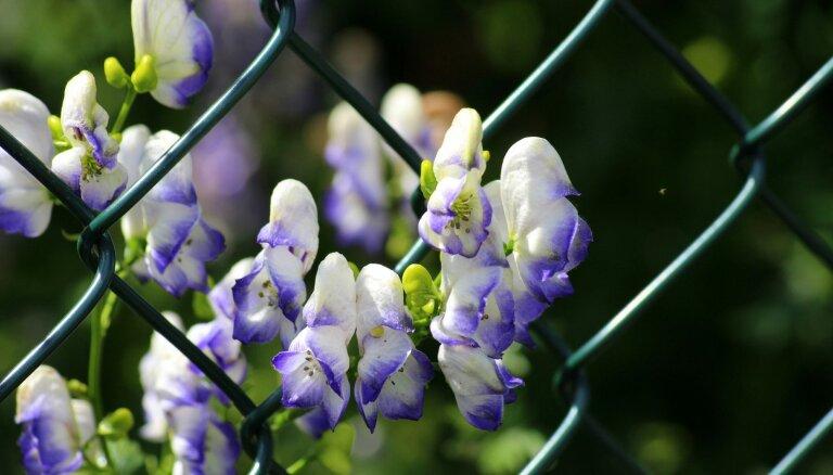 10 прекрасных, но смертельно опасных цветов