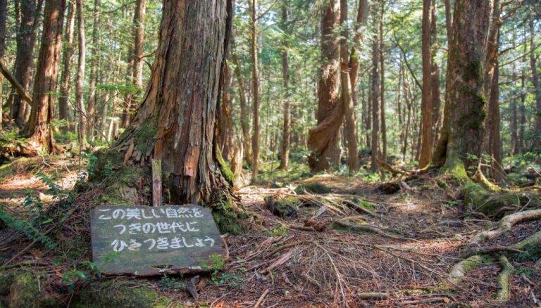 'Pašnāvību mežs' Japānā – folkloras stāstu, tradīciju un mediju upuris