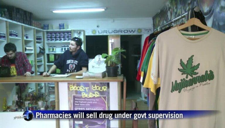 Video: Urugvajā legalizēta marihuānas audzēšana