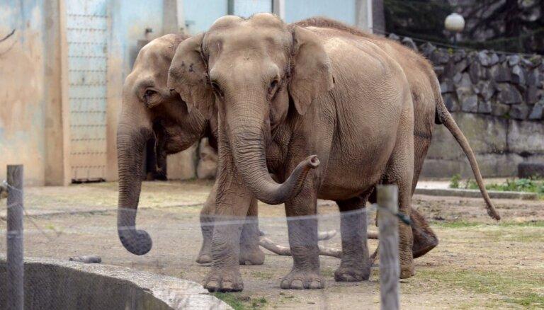 Скончался слон Непал, права которого отстаивала актриса Брижит Бардо
