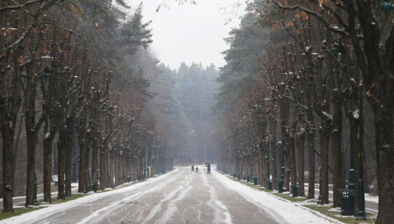 Lapu koku invāzija Mežaparkā – izcirtīs veco priežu apdraudētājus