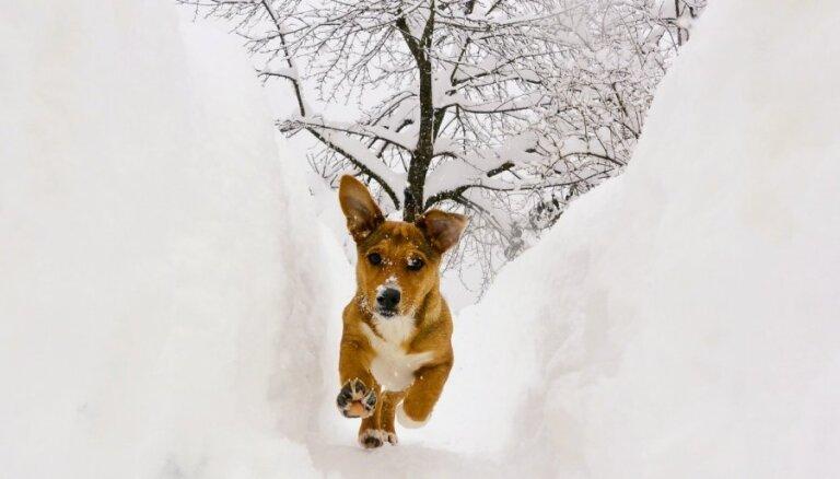 Aukstajā laikā dzīvnieku sargi aicina ļaut ķepaiņiem sildīties telpās