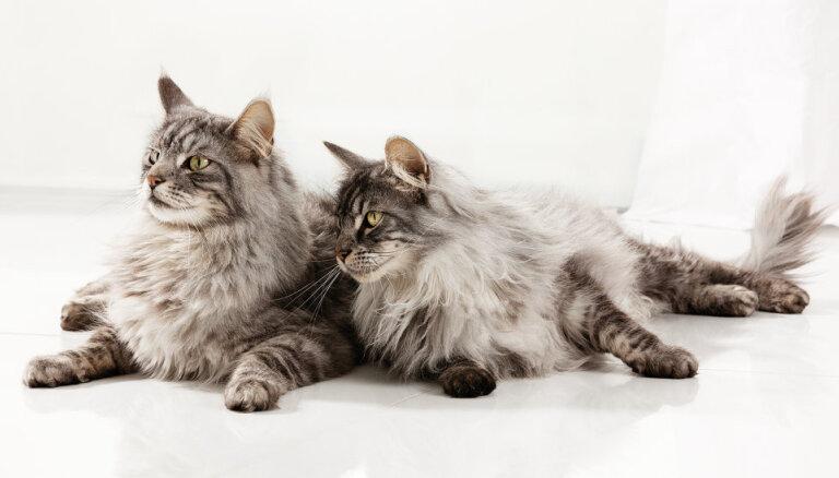 Вызов: Наблюдай за своей кошкой и выигрывай корм на шесть месяцев