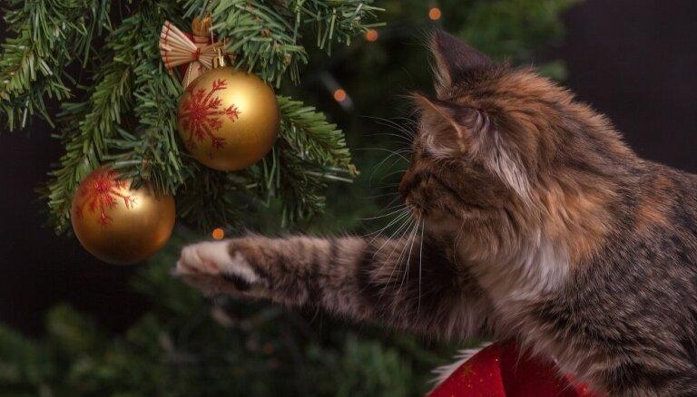 Konkurss: Parādi, kā tavs mājdzīvnieks svin svētkus!