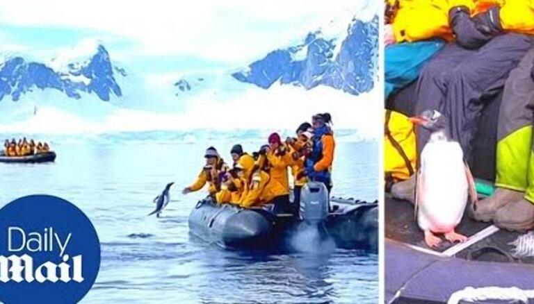 ВИДЕО. В Антарктиде пингвин спасся от косаток, запрыгнув в лодку с туристами