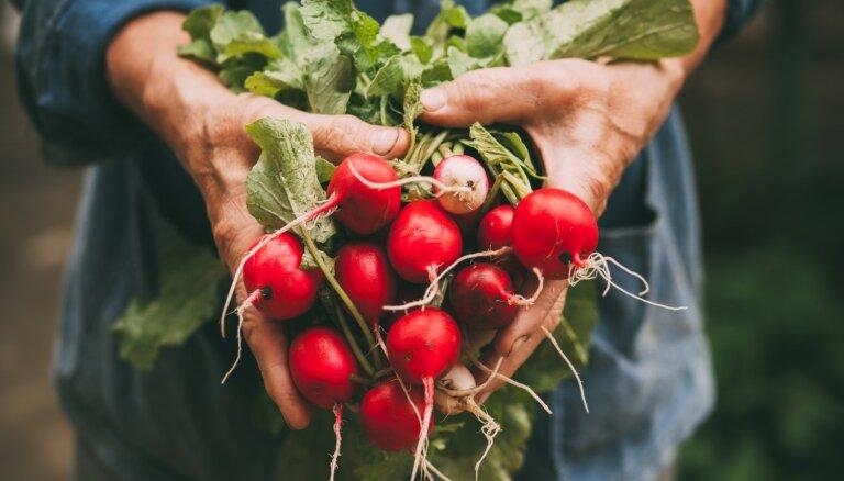 Минфин: сниженная ставка НДС на местные фрукты и овощи отрицательно влияет на государственный бюджет